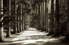 Botannical Gardens